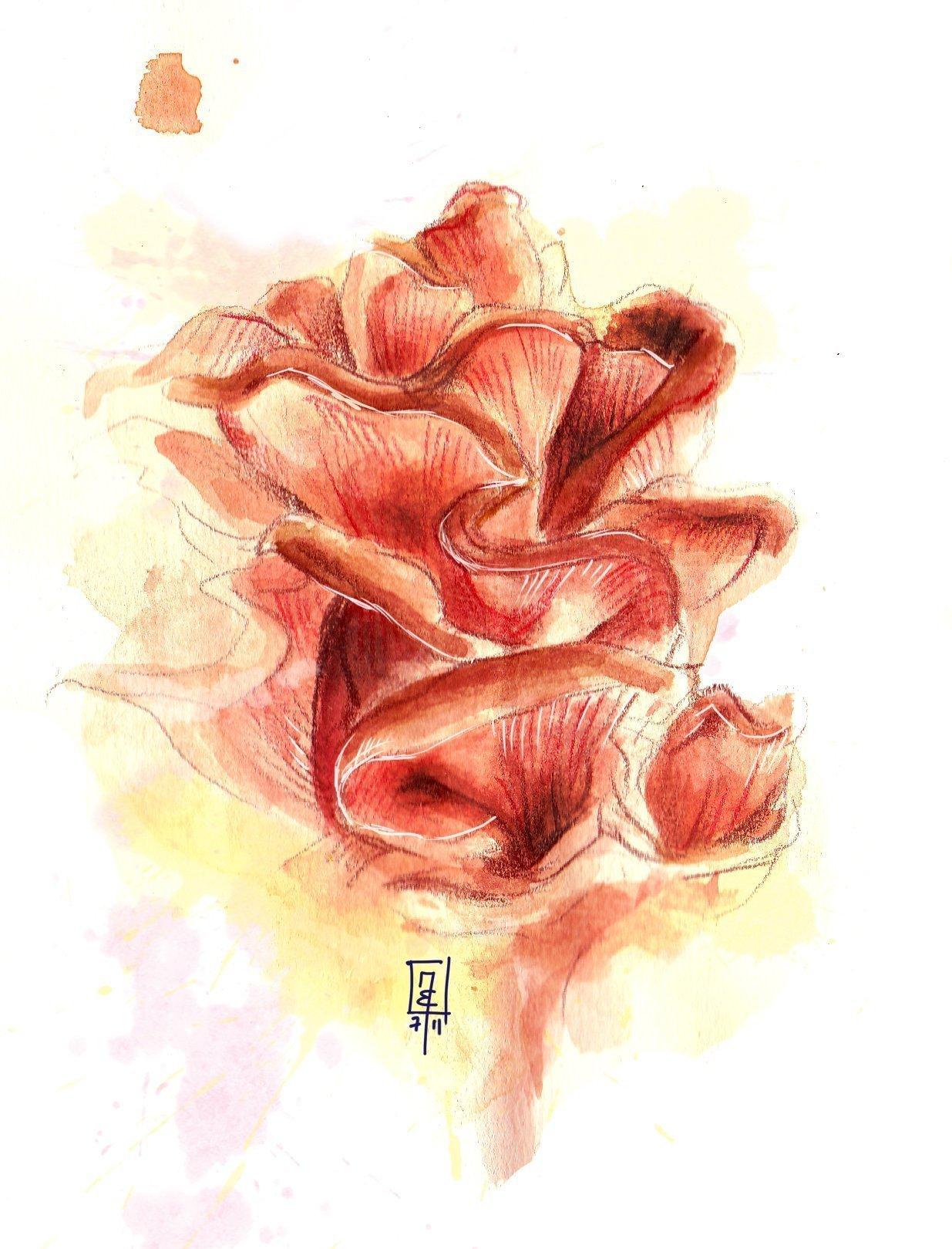 Tagliatelle mit Rosenseitling und Spargel